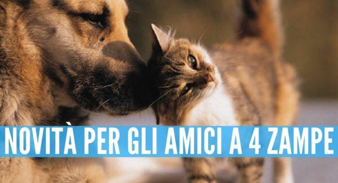 Campania. Toelettatura per cani e gatti