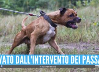 Aggressione Pitbull