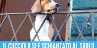 """Orrore a Napoli, lancia il proprio cane dal balcone: """"Vergognati, fai schifo!"""""""
