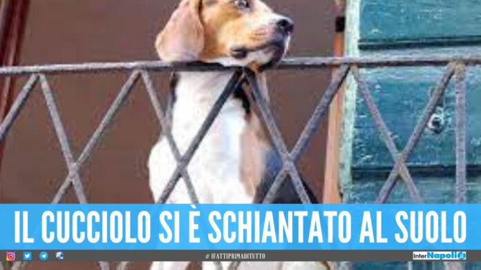Orrore a Napoli, lancia il proprio cane dal balcone: