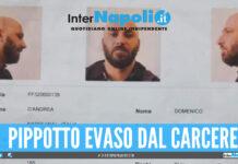 Pippotto Domenico D'Andrea pippotto