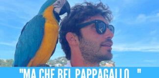 Stefano De Martino e il Pappagallo