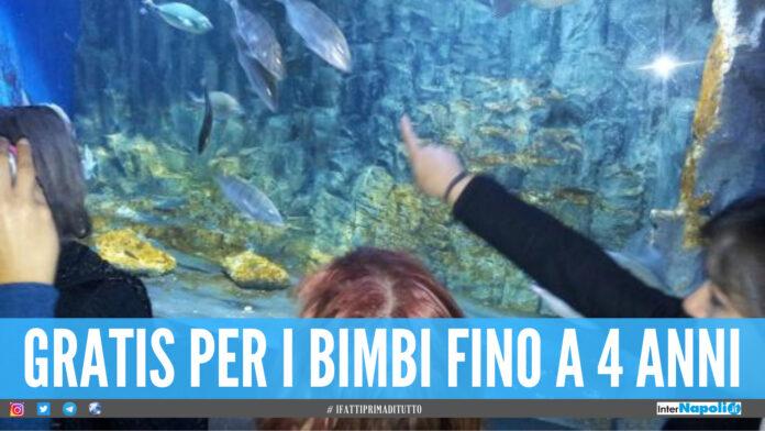 Riapre l'Aquarium di Napoli, visite gratuite per la Giornata Mondiale degli Oceani