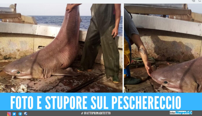 squalo a Terracina
