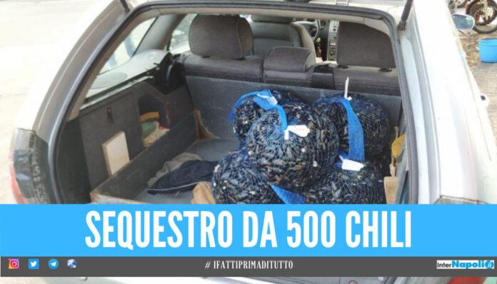 Cozze pericolose per la salute, a Napoli maxi sequestro da mezza tonnellata