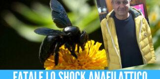 Punto da un'ape, Maurizio morto dopo unoshock anafilattico