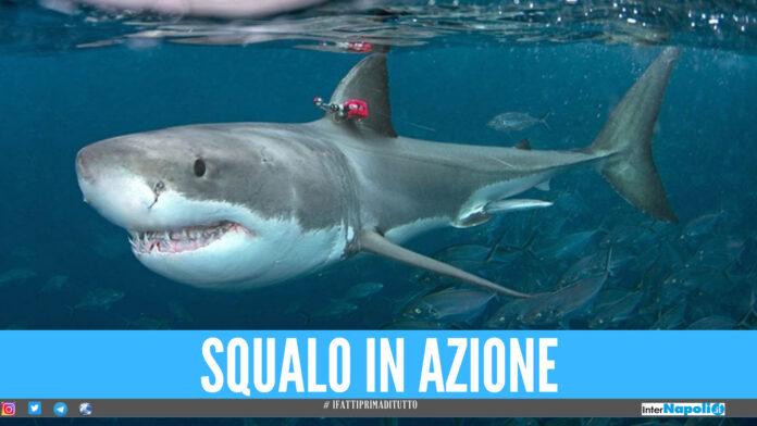 squalo squali giornata mondiale degli squali