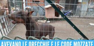 Doberman liberati dal 'lager' a Napoli, erano nascosti nel giardino comunale