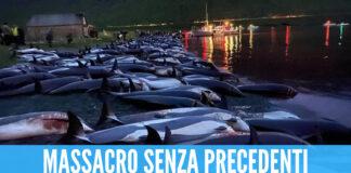 Foto della mattanza dei delfini alle isole Faroe