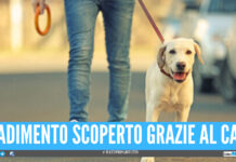 """""""Porto il cane a fare pipì"""", ma andava dall'amante: tradimento scoperto grazie al cucciolo"""