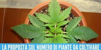 Primo sì alla legge a casa sarà possibile coltivare piante di marijuana