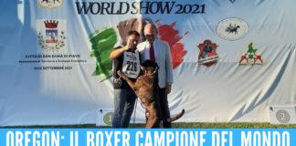 Oregon: il boxer campione del mondo