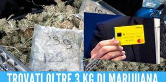 Coltivava marijuana e incassava il Reddito, arrestato 50enne in Campania