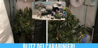 serra marijuana