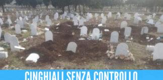 Cinghiali all'assalto del cimitero di Palermo, lapidi distrutte e fosse tra le tombe