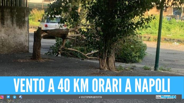 Vento a 40 km orari a Napoli e provincia, crollano alberi e tabelloni